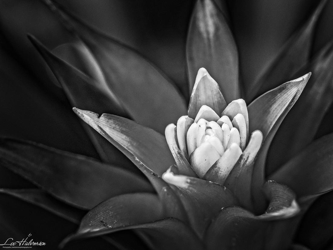 Macro flower black and white