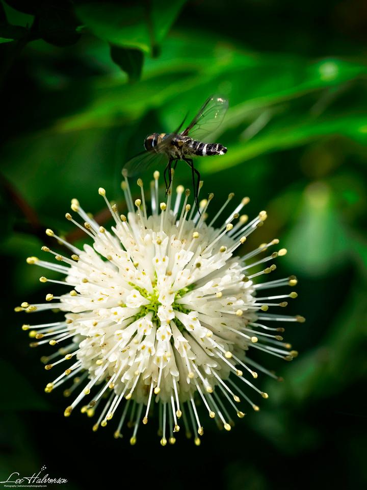 Kenilworth Park Bee