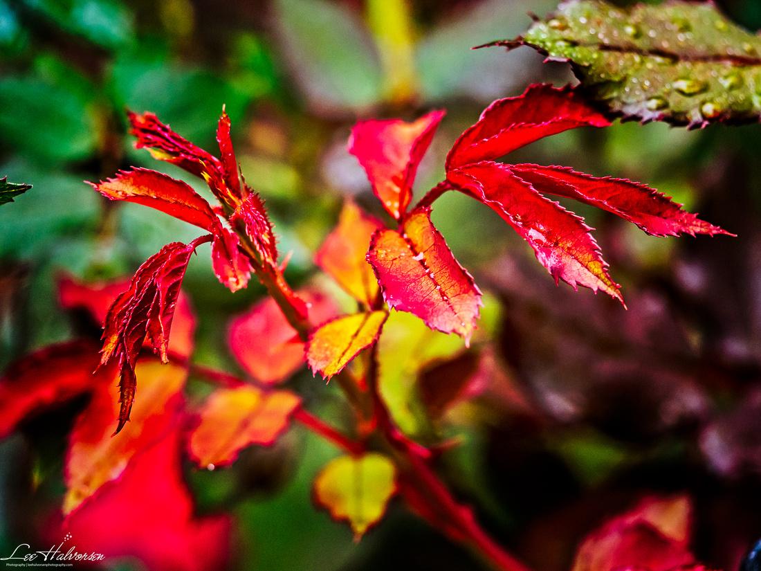 Fall colors on U Street