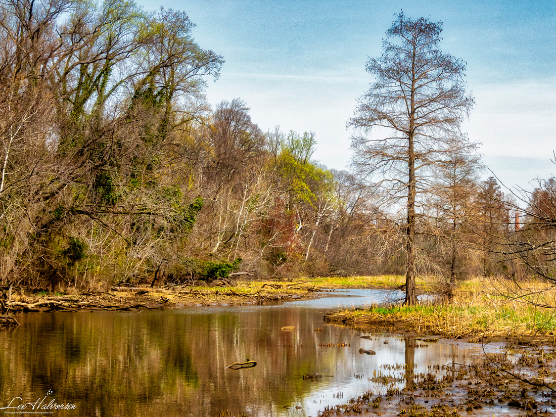 The marsh side on the Teddy Roosevelt Island