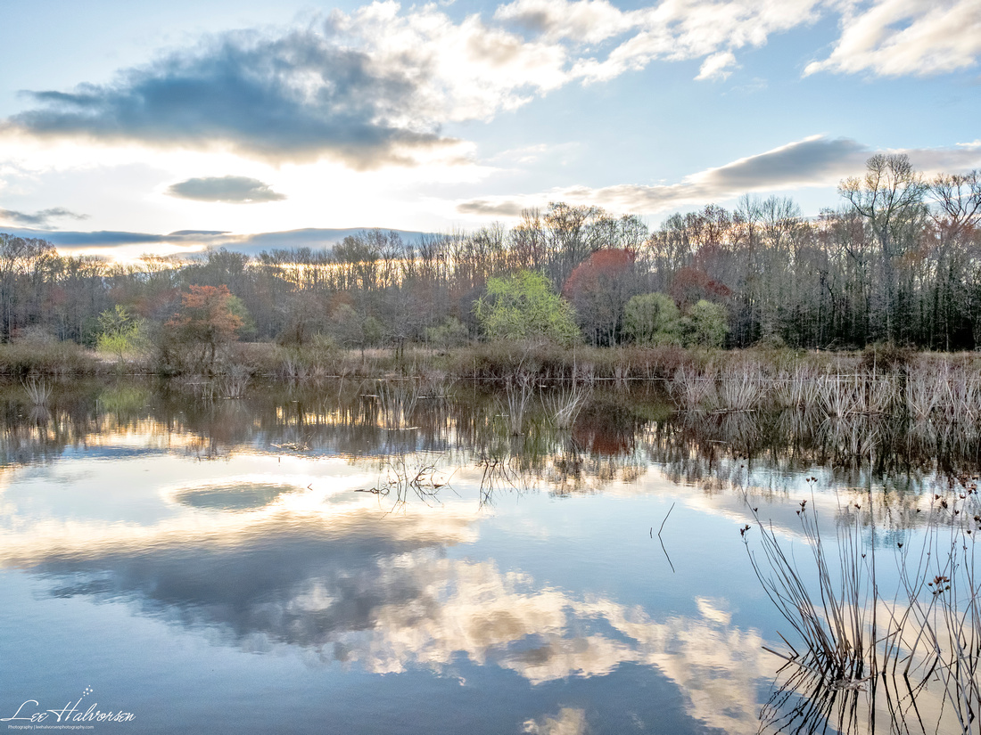 Huntley Meadows Park at Sunrise