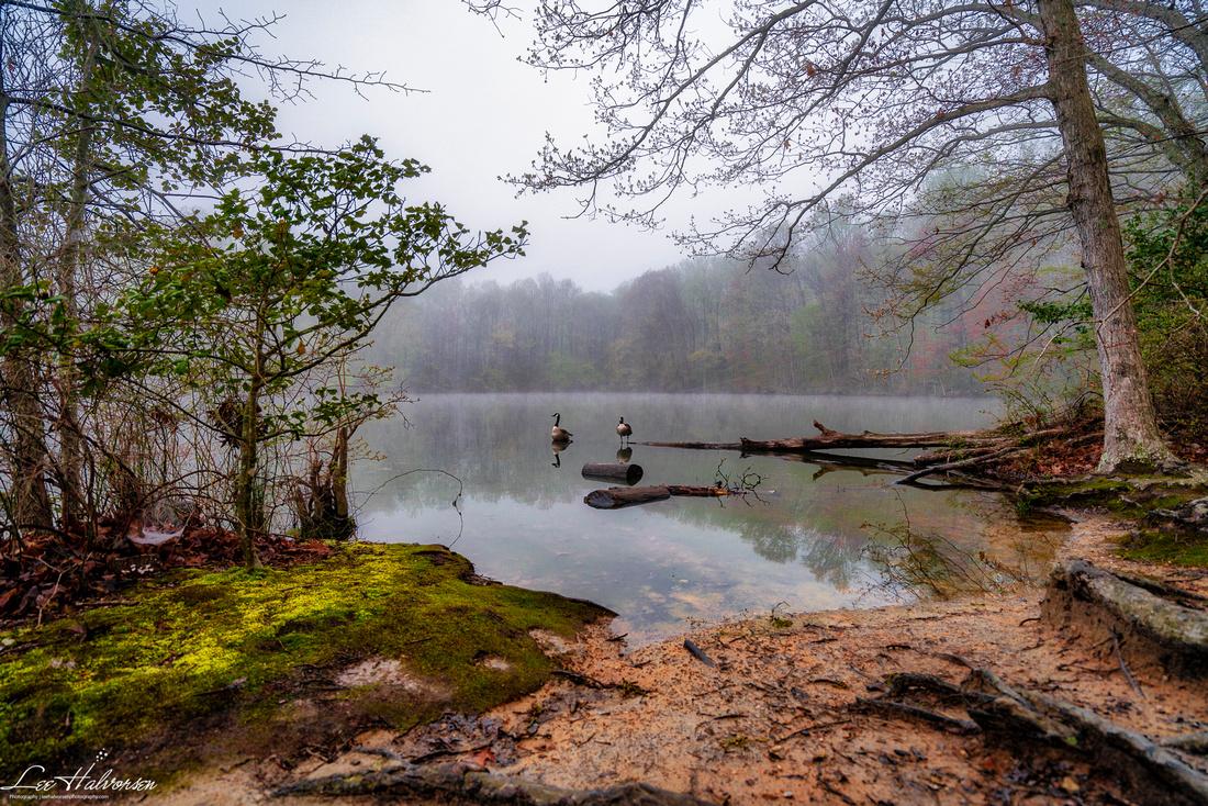 Rising fog at Burke Lake.