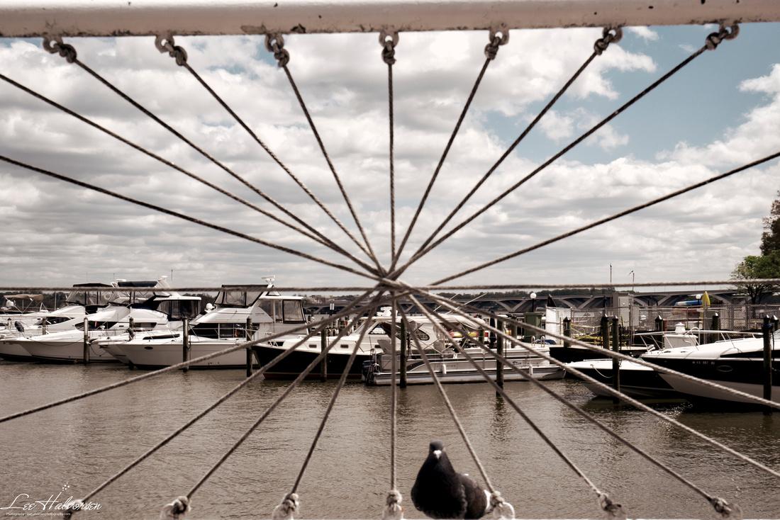 Docks and Dove, Alexandria, VA
