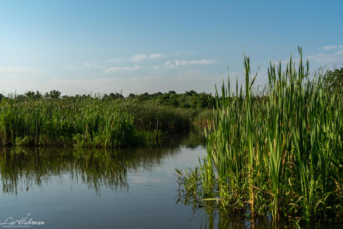Wetlands of the Anacostia