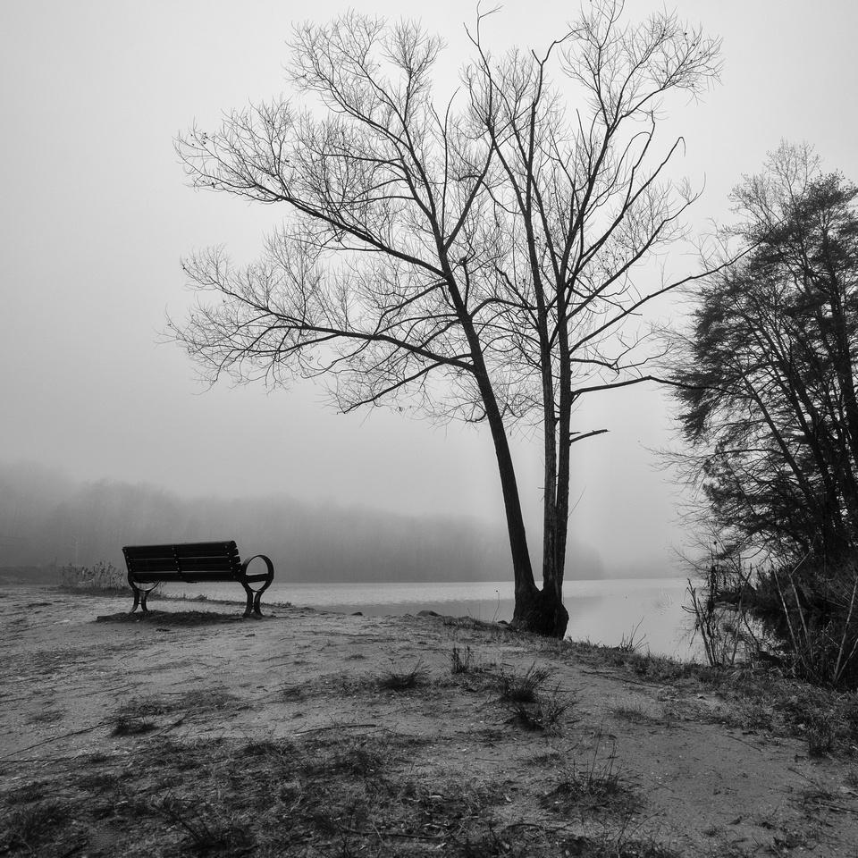 Overlooking Lake Accotink fog