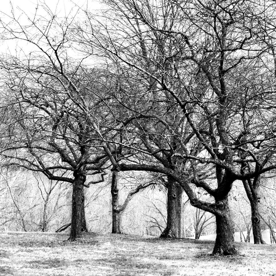 Winter Woods Guardians