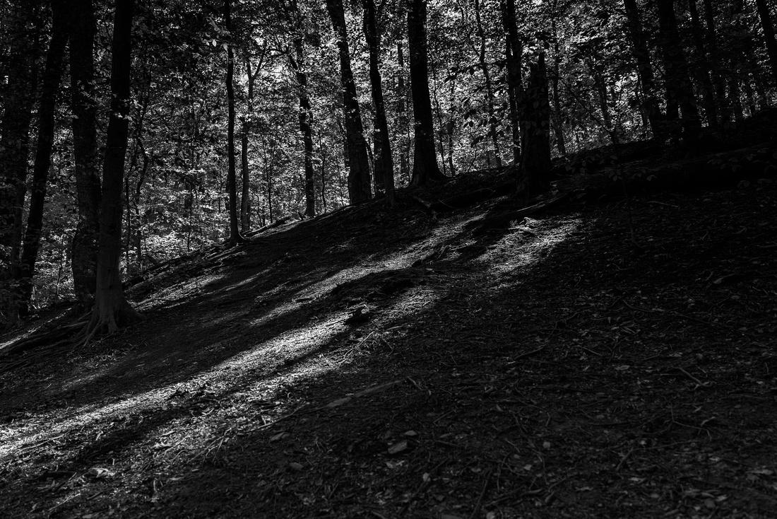 Arlington County Park