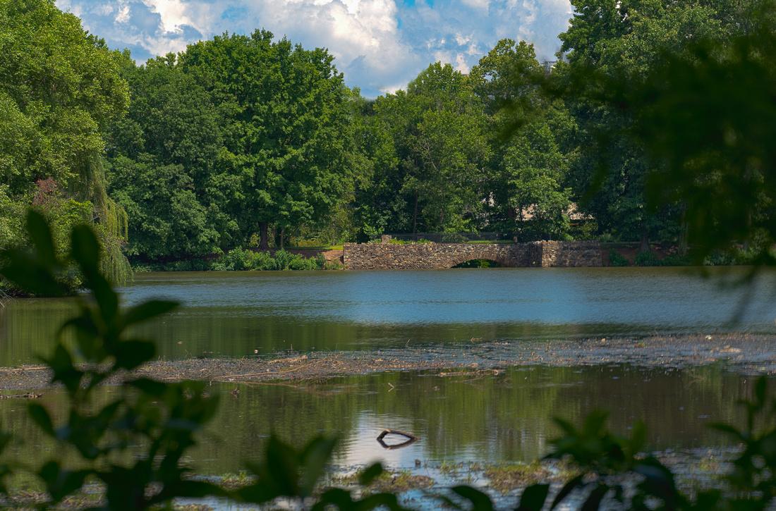 The Bog Park Lake