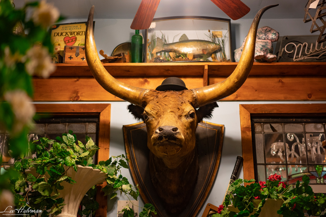 Steer's Head in English Pub