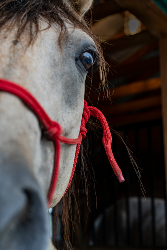 Horse wanted my camera