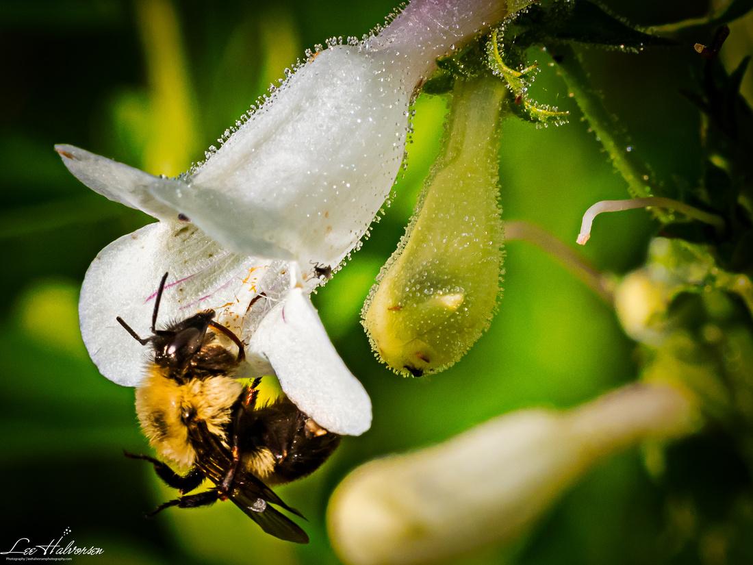 Springtime bee!